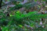 Staatliche Förderungen für den Waldumbau attraktiv wie selten